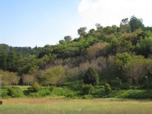 画像:森林整備1