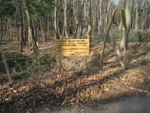 画像:森林整備2