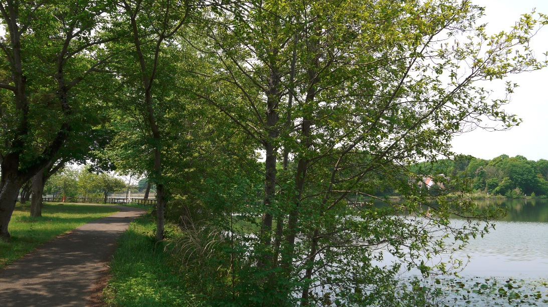 『『上野沼やすらぎの里上野沼』の画像』の画像