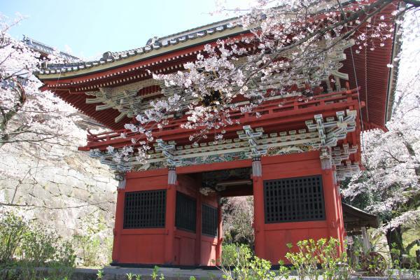 画像:雨引の桜